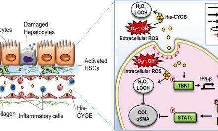 Citoglobina: tratament important în prevenirea bolilor hepatice