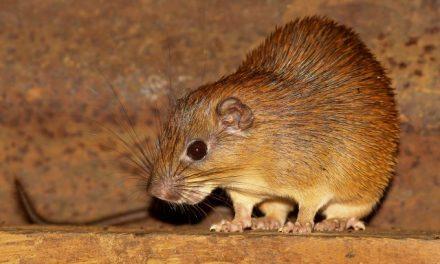 Hepatita D: cum a trecut virusul de la animale la oameni